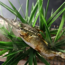 皮はパリッと、中はふっくら。絶妙な焼き加減でご提供する鮎の塩焼きは絶品です(写真は2名様分)