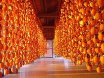 柿のれん(柿すだれ)は、紅葉の景観にいっそうの美しさを添え、秋の風物詩になっています