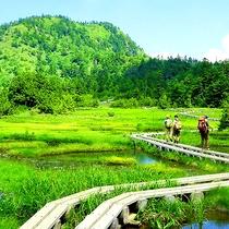 志賀高原の夏