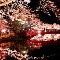 臥竜公園(須坂市)の夜桜