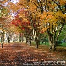 香雪園の紅葉