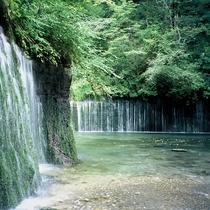 ■わんちゃんも喜ぶ白糸の滝