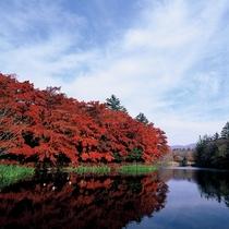 ■紅葉広がる雲場池
