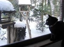 温泉猫、メル