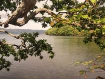 紅葉の,屈斜路湖