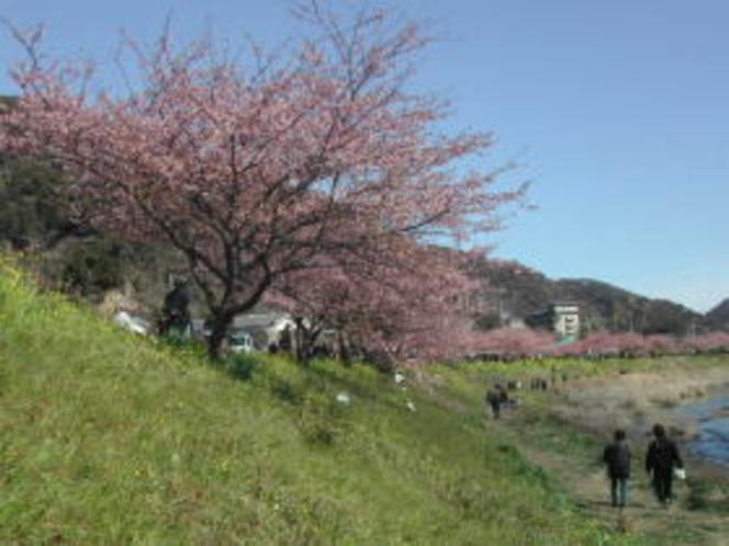 春が来た〜4