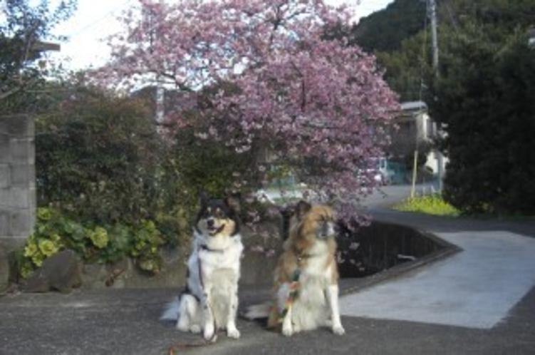 春が来た〜1