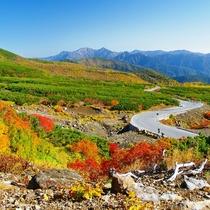 ■秋の乗鞍高原