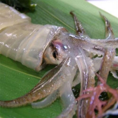 海洋深層水のいけすから活きたまま、調理する活イカ料理