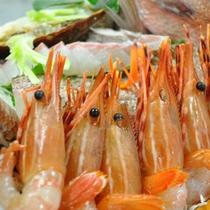 キトキト、ぷりっぷりのお刺身をご賞味ください。