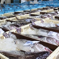 宇出津漁港に水揚げされた魚