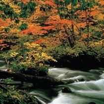秋 奥入瀬渓流の紅葉