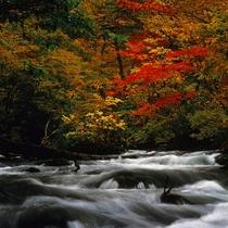 【奥入瀬渓流】秋