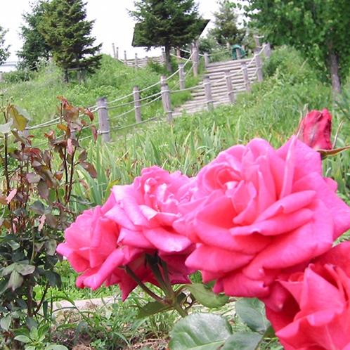庭園に咲く草花
