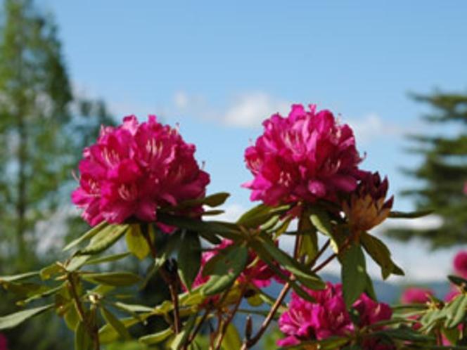 敷地内に咲く草花