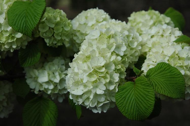庭園内に咲く花