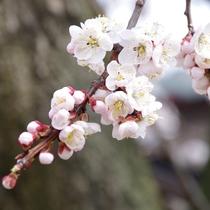 2014-04_annzu