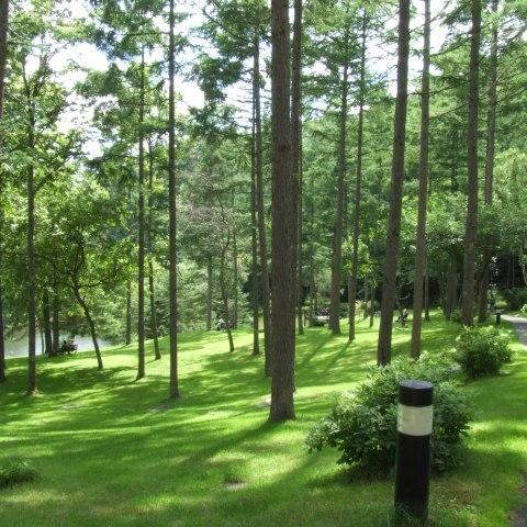 清々しい空気の中、森林浴をしながらの散歩♪