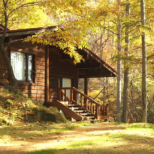 *晩秋のロッジ。黄金色に輝く落ち葉が一面に広がります。