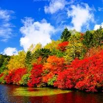 【紅葉スポット】白駒池(10月上旬~中旬)ホテルより車で約60分