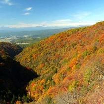 *紅葉の見ごろは例年10月中旬~11月下旬。この時期だけの絶景が楽しめます。