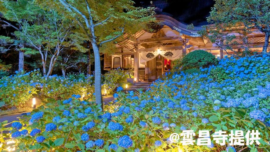 雲昌寺~アジサイ夜間ライトアップ
