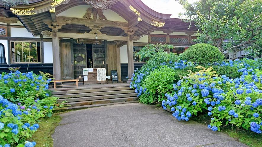 男鹿の新名所 雲昌寺」1200株のアジサイが咲きます。