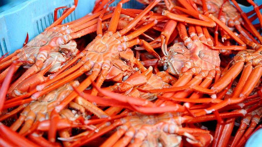 男鹿産紅ズワイガニ漁