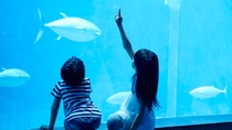 **黒潮の海を再現した巨大水槽はお魚に手が届きそう!神秘的な光景にお子様も感動間違いナシ!