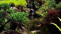 *[庭園]池には大きな鯉が泳いでおります