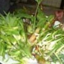 小代の山菜