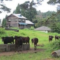 黒毛和牛【但馬牛】