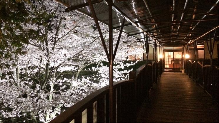 神代橋からの桜
