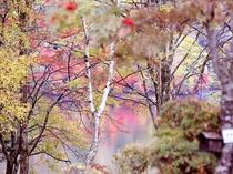 絵画のような丸沼の紅葉です。