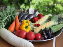 地産の夏野菜 一例