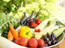 地産の夏野菜です。