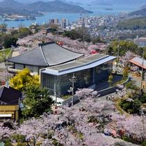 千光寺の桜