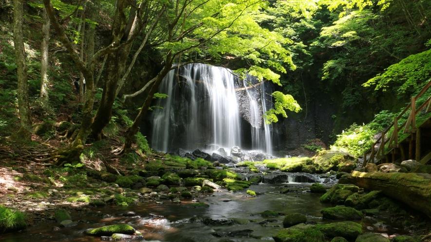 ■周辺観光/達沢不動滝_周囲はブナの原生林に囲まれていて、幻想的な雰囲気を醸し出しています。