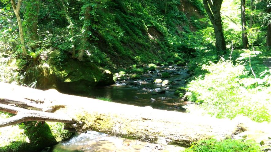 ■周辺観光/達沢_いなわしろ新八景「達沢不動滝」へ続く山道も神秘的です。