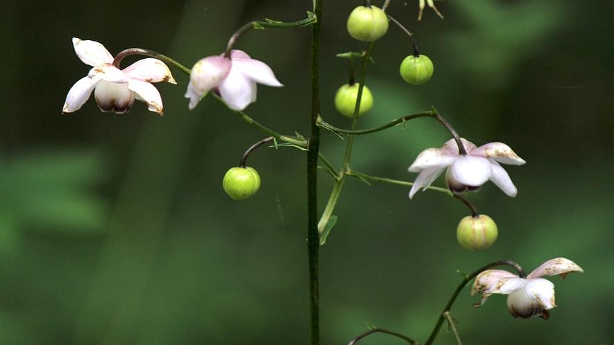 ■周辺観光/万葉の庭(イメージ)_高山植物や湿原の花まで約2000種類を見ることができる植物園です。