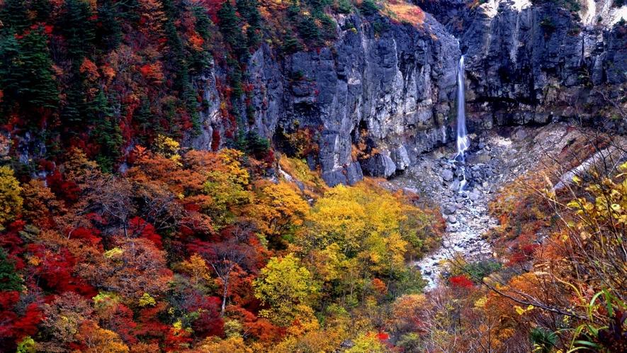 ■周辺観光/白糸の滝_秋は釧望台から紅葉と流れる一筋の滝の絶景が楽しめます。
