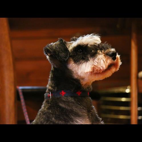 【看板犬】ロリンザちゃんもお待ちしております♪