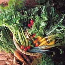 有機栽培されたこだわりのEM野菜