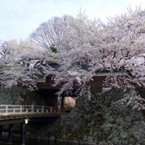 諏訪高島城公園の桜(太鼓門)