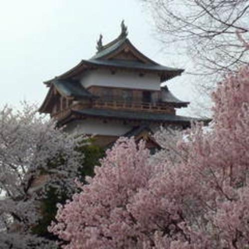 諏訪高島城の桜