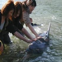 【下田海中水族館】ドルフィンビーチでイルカにタッチ♪