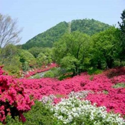 小室山つつじ祭り(伊東)4/29~5/5