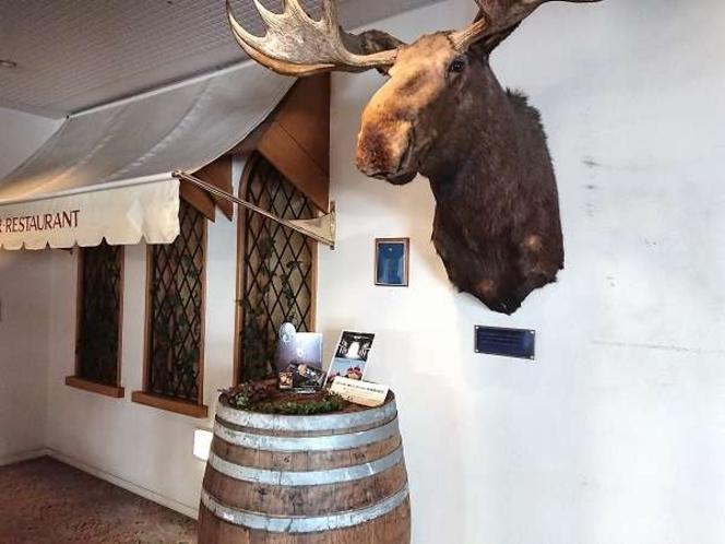 アラスカ天然記念物のオオヘラジカの剥製