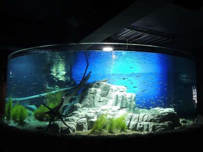 ◆サケのふるさと千歳水族館
