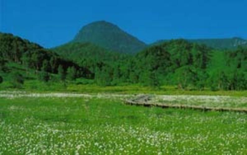 新緑のハイキングコース